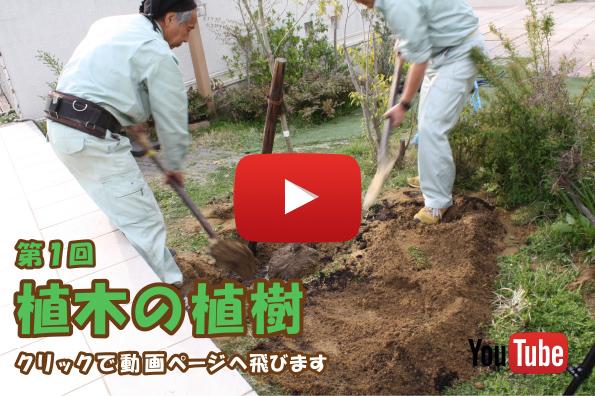 植木の植樹