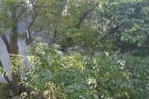 うっそうと茂る草むらや木陰が近くにあれば。