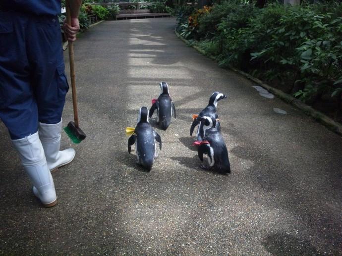 ペンギンが滑らないように洗い出しの園路です。