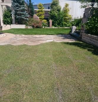 芝生の張替