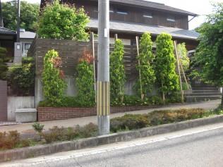 台風前に支柱が必要な程でした。