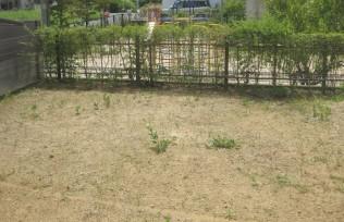 土が残り、草が生えます。