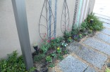 ココマ前の植栽2